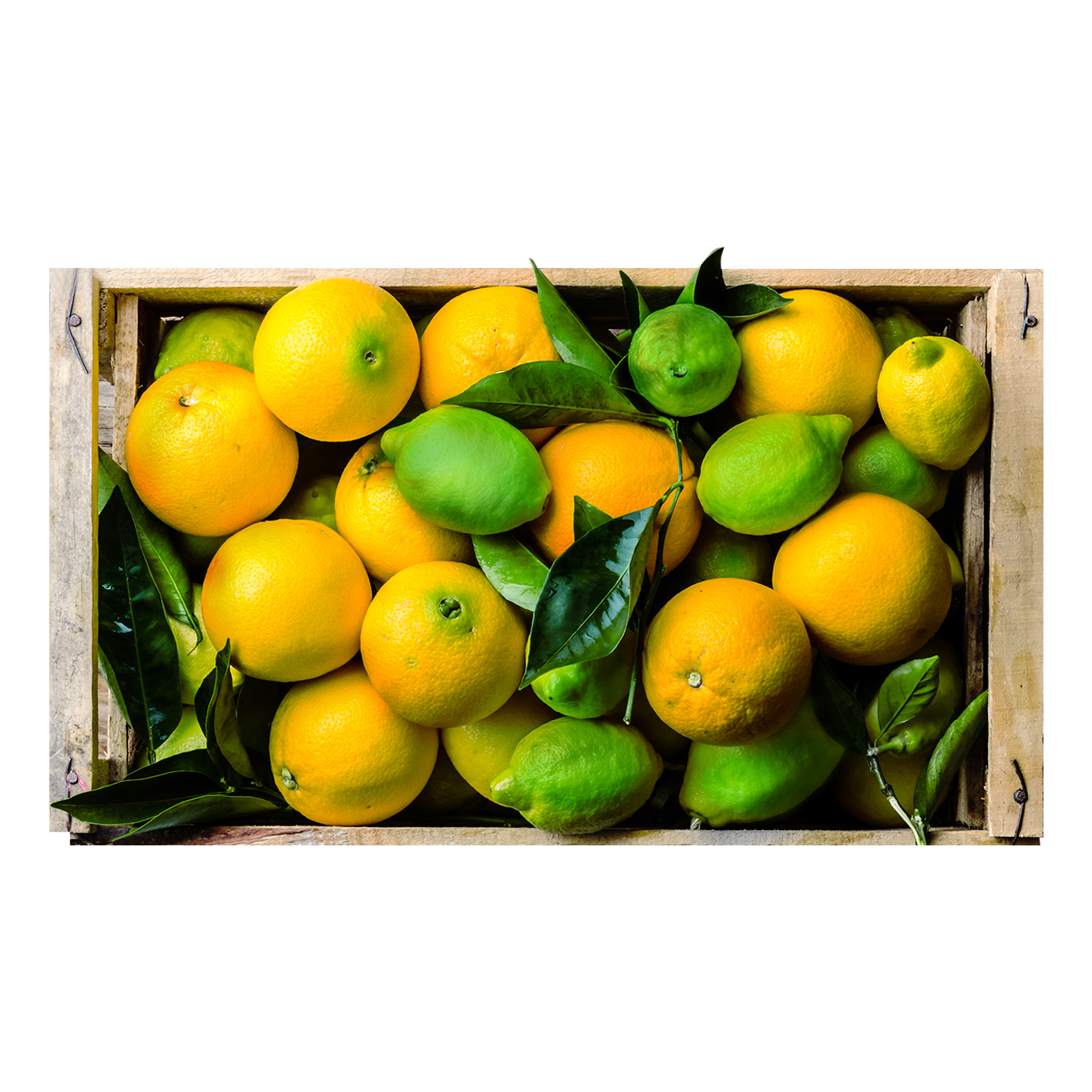 Naranja Salustiana - Limón Tahiti ( 20 Kg Naranja/ 3Kg Limón)
